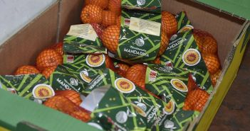 neretvanska-mandarina