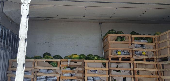 marihuana među lubenicama