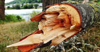 slomljena grana, stablo