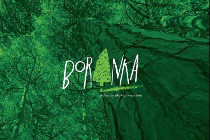 Tisuću volontera Boranke u Kučinama kod Solina posadilo deset tisuća novih stabala u sadnicama i sjemenu