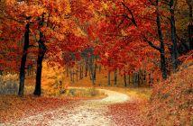 jesen šuma lišće