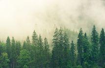 šuma pošumljavanje