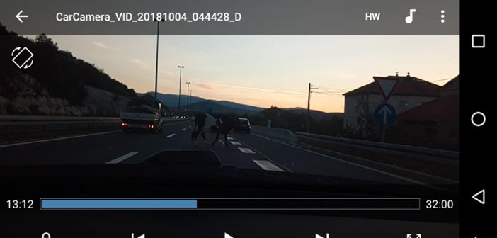 krava na cesti