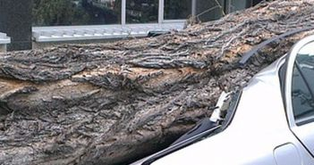 stablo palo na auto