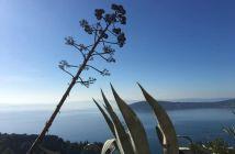 marjan agava more čiovo