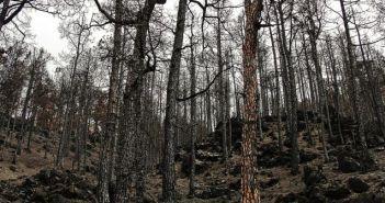 požar, spaljena šuma