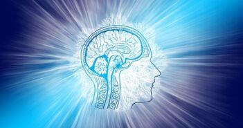 mozak, Mensa